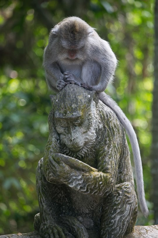 Ubud Monkey at Rest