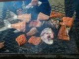 Fish BBQ in Deline