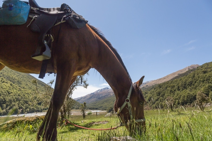 New Zealand High Country Horses