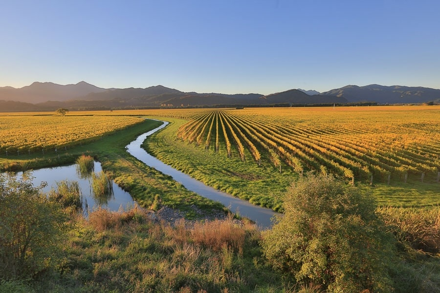 Marlborough Vineyard in Fall