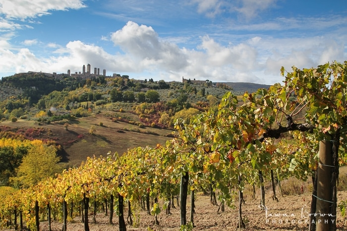 View of San Gimignano Towers from Pietraserena Vineyard