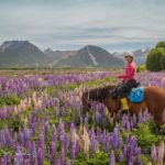 New Zealand High Country by Horseback  an unforgettable ride!hellip