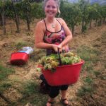 Harvest time at arrigonipietraserena outside San Gimignano! wineharvest vendemmia winehellip