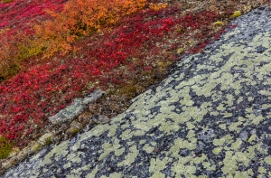Colorful ground cover of the barrenlands