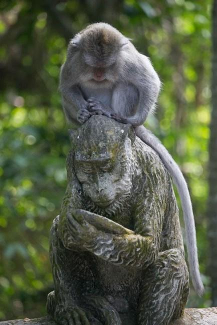 Ubud Monkey at Rest