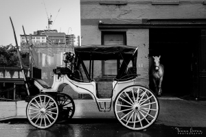 Horse and carriage off duty, New York City