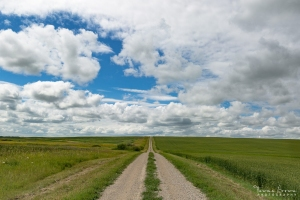 Dirt Road on the Prairies