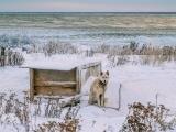 Husky dog in winter