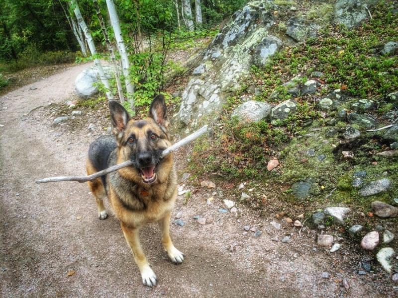 Tika with Stick